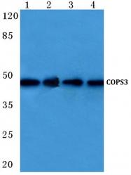 AP06187PU-N - COPS3