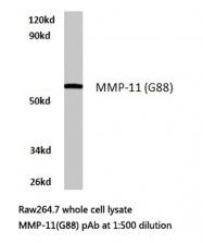 AP06225PU-N - MMP-11