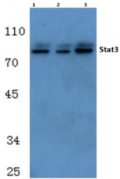 AP06327PU-N - STAT3