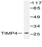 AP06464PU-N - TIMP4