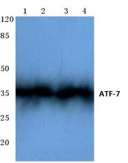 AP06675PU-N - ATF7