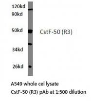 AP06715PU-N - CSTF1