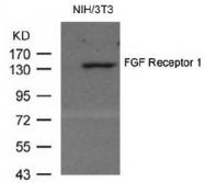 AP08061PU-N - FGFR1