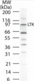 AP08455PU-N - LTK / TYK1