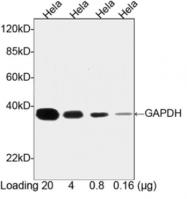 AP08523HR-N - GAPDH