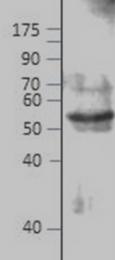 AP09986PU-N - E2F4