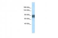 AP10563PU-N - Advillin
