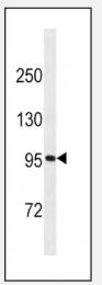 AP11513PU-N - CD19