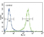 AP11992PU-N - UCHL1 / PGP9.5