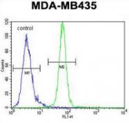 AP13559PU-N - AKT1 / PKB