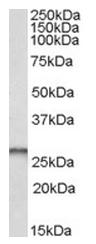 AP15870PU-N - PGAM1/ PGAM2 / PGAM4