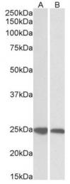 AP15953PU-N - GRB2  / ASH