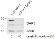 AP16015PU-N - DAP3 / MRPS29