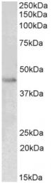 AP16042PU-N - PAX8