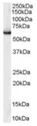 AP16081PU-N - PUF60 / SIAHBP1