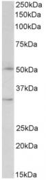 AP16144PU-N - FOXL2