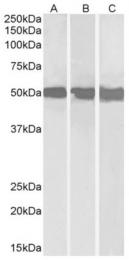 AP16459PU-N - DDX6