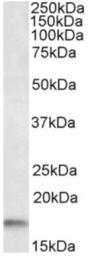 AP16467PU-N - AIF1