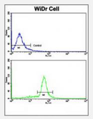 AP17828PU-N - Villin-1