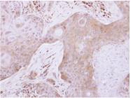 AP19021PU-N - Glutaredoxin-3 / GLRX3