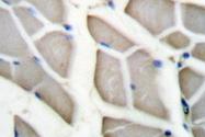 AP20192PU-N - 14-3-3 protein zeta/delta