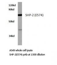 AP20278PU-N - PTPN11 / PTP2C