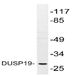 AP20450PU-N - DUSP19
