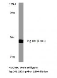 AP20455PU-N - TSG101