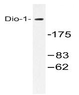 AP20551PU-N - DIDO1