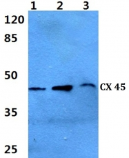 AP20594PU-N - GJC1 / Cx45