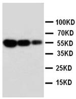 AP23251PU-N - CD95 / FAS