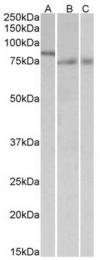 AP23663PU-N - IRF2BP1