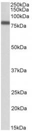 AP23751PU-N - IRF2BP1