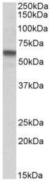 AP23753PU-N - STK38