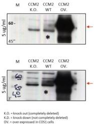 AP26022PU-N - Malcavernin