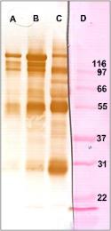 AP26434PU-N - CD163