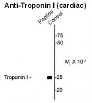 AP26442PU-N - Cardiac Troponin I