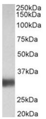 AP31927PU-N - SFTPA1