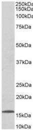 AP32059PU-N - 6CKine / CCL21