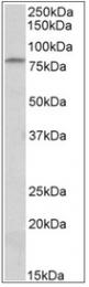 AP32070PU-N - CD97