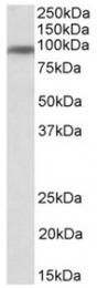 AP32133PU-N - CD71 / TFRC