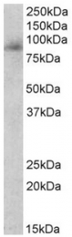 AP32134PU-N - Myeloperoxidase