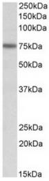 AP32137PU-N - KEAP1