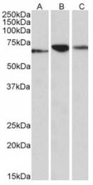 AP32138PU-N - PDIA2