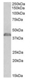 AP32141PU-N - NCF1