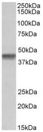 AP32148PU-N - PTCD2