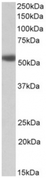 AP32157PU-N - Alpha-1A adrenergic receptor / ADRA1A