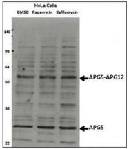 AP32173PU-N - APG5L / ATG5