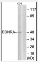 AP32213PU-N - Endothelin A receptor