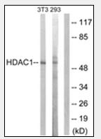 AP32221PU-N - HDAC1